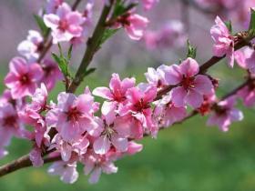 你有桃花运么?细数紫微斗数中的桃花星